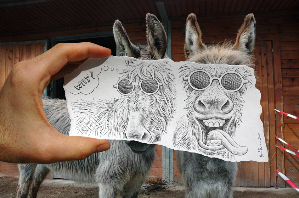 Donkeys by Ben Heine