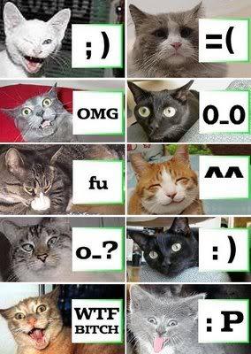 cats-emotion