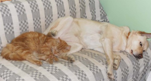 Lilly and Mr Ginger