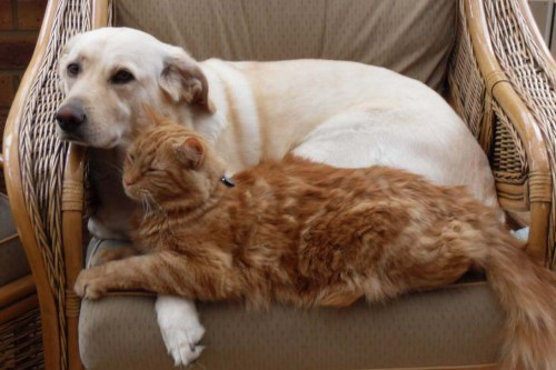 Mr Ginger and Lilly