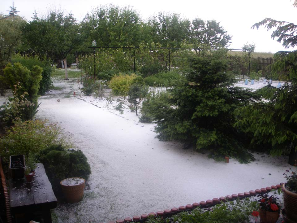 My parents garden. 8 June 2013, Opole, Poland