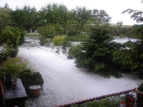 My parents garden. 8 June 2013, Opole, Poland