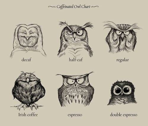 Caffeinated Owl Chart by Dave Mottram