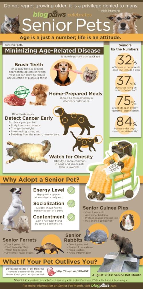 Infographic - Senior Pets