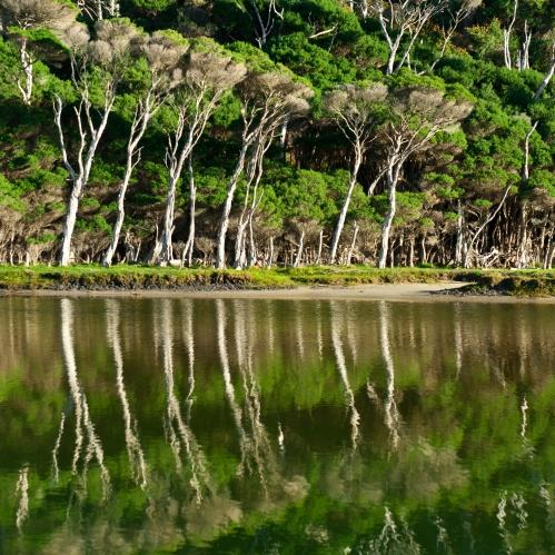 Wilsons Promontory National Park, Tidal River, Australia