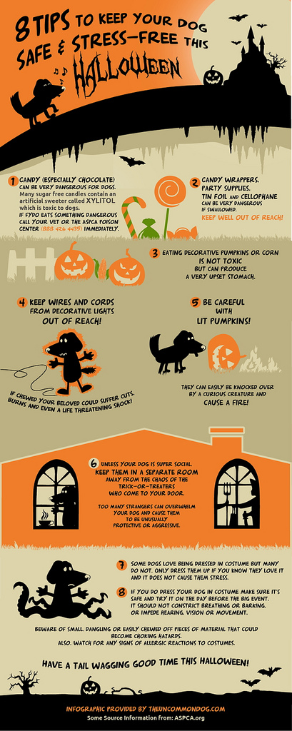 infographic  u2013 8 tips to keep your dog safe and stress