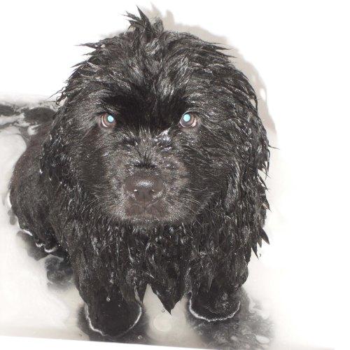 My 1st bath