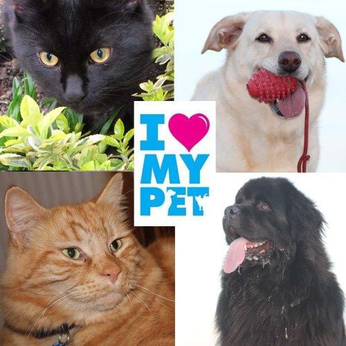 I Heart My Pet campaign