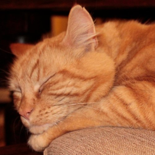 Mr. Ginger – because he is always ready for cuddles
