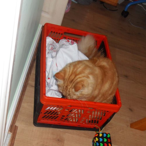 ... inspecting a full laundry basket...