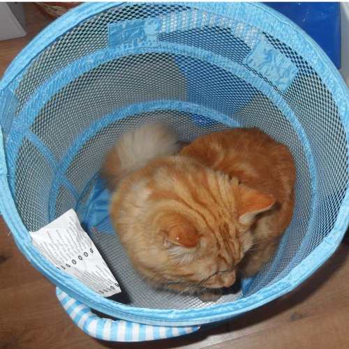 ... inspecting an empty  laundry basket...