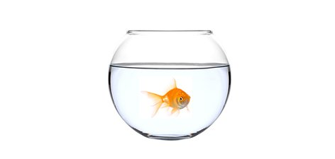 A-Goldfish-In-A-Bowl