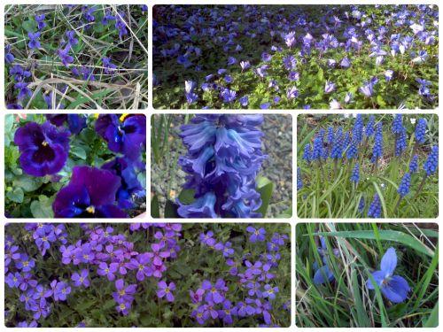 Blue-is