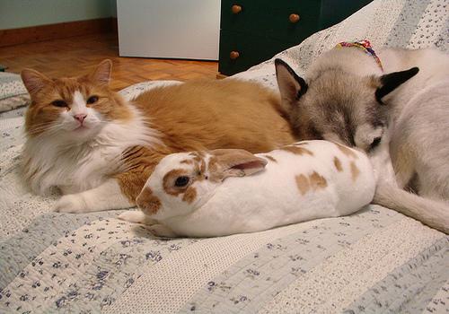 rabbit-cats-dogs