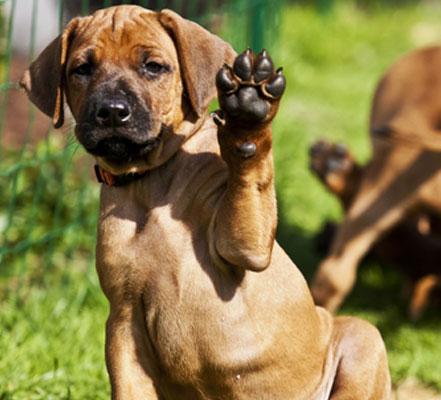 waving-dog