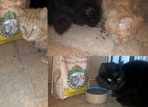 My cats and Harringtons cat food chicken with rice