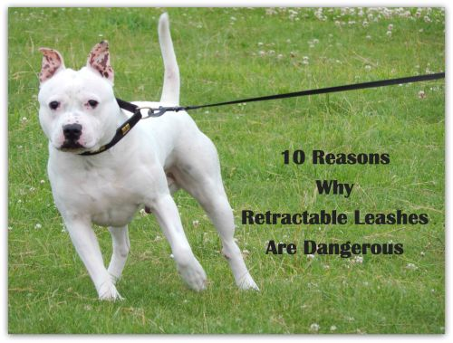 10 Reasons Why Retractable Leashes Are Dangerous