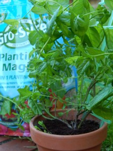 My Gro-Sure Planting Magic Mint
