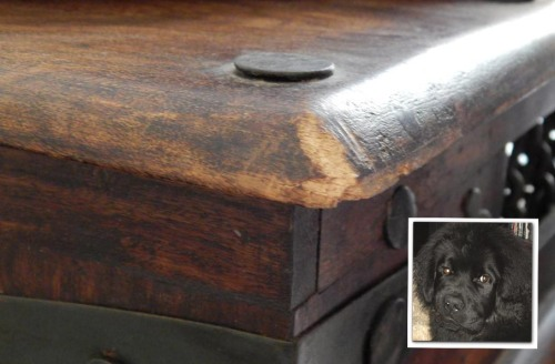 Case#2: Prime Suspect - Bunk Reason: unknown... maybe wooden tables look like sausages to him or just taste nice