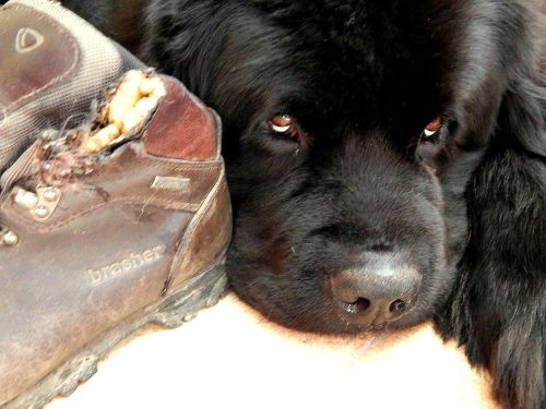 Case#4: Prime Suspect - Bunk Reason: Mum needs new walking boots (yay!)