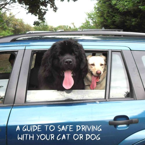 A guide to safe driving with your cat or dog