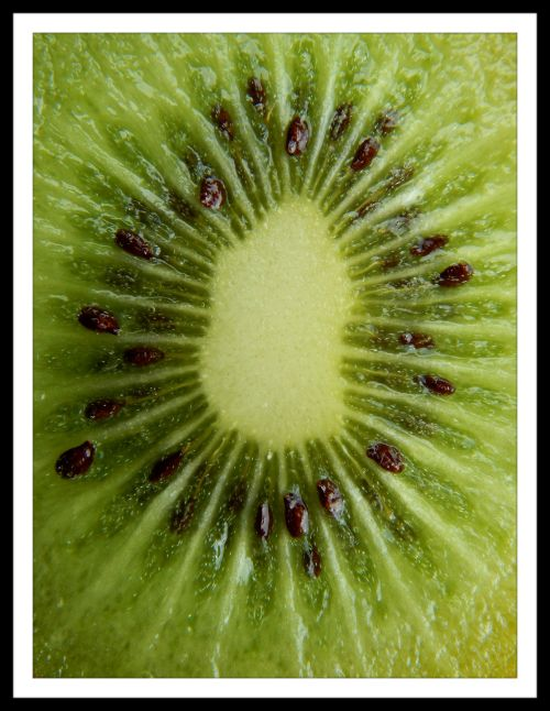 Alphabet Project  K is for Kiwi