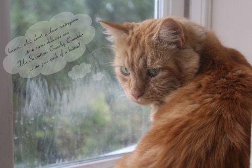 Cat Dreams – Felix Crunchy Crumbles Machine