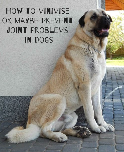 How to minimise or maybe prevent joint problems in dogs