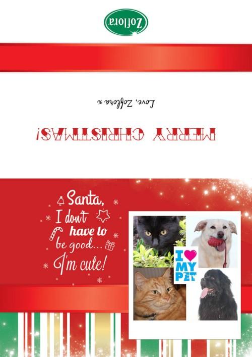 Zoflora, Pets and Christmas