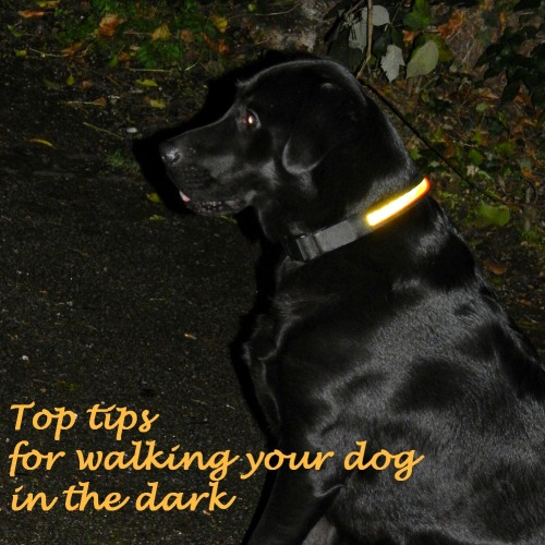 Top tips for walking your dog in the dark